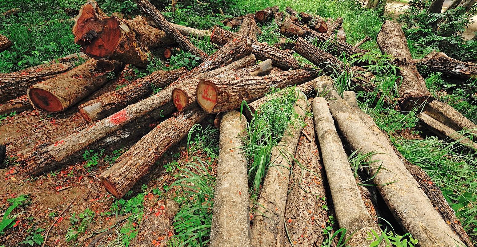 AB'nin yenilenebilir enerji direktifleri küresel ormanları tehdit ediyor - Haber - Solarist - Güneş Enerjisi Portalı